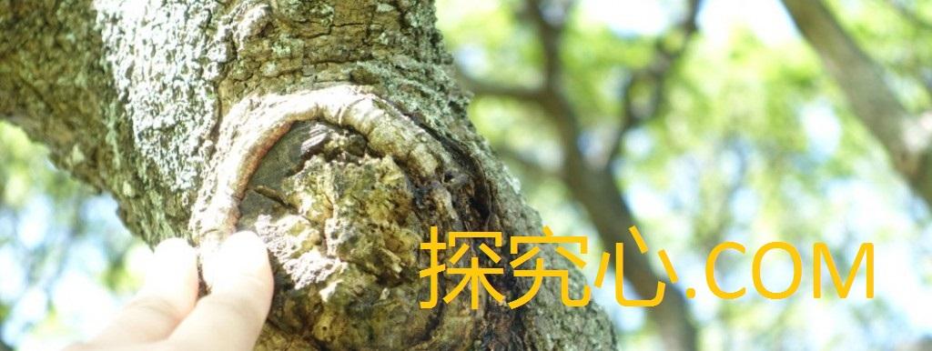 探求心.COM